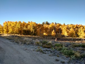 Aspens on the Ranch