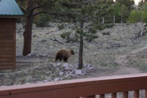 Bear3Corky